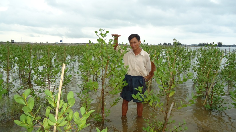 02._Mangrove_grow_up_on_shore_on_September_2010