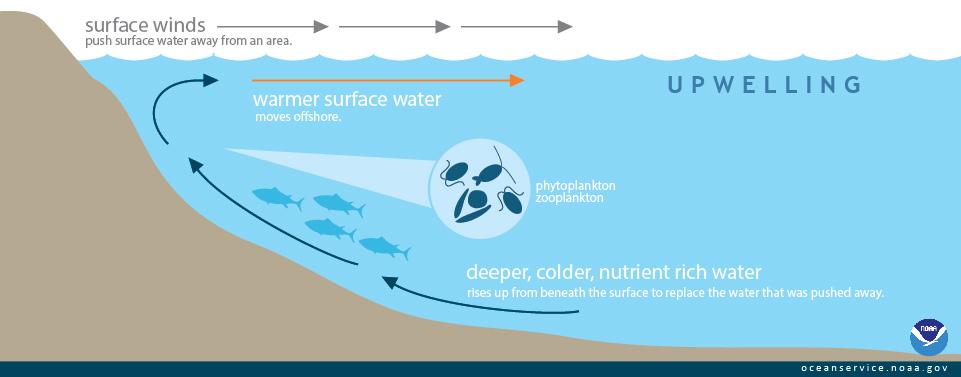 Upwelling Zones  U2013 Secrets Of The Deep Ocean  U2013 Clim U0026 39 Blog