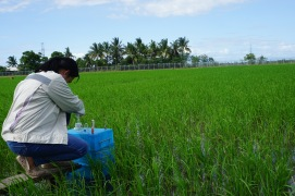 Olivyn – Female Scientist at the International Rice Research Institute in the Climate Change Unit (Los Banos, Philippines) Sampling GHG in rice fields. Climate Change and Agriculture are intricately linked. On the one hand, a rise in temperature may affect the occurence of natural hazards and, thereby, affect crops at the expense of food security and farmers' livelihoods. On the other hand, agriculture is a major driver of greenhouse gas emissions. Crops and agricultural practices as in rice production emit GHG gases such as Methane and Nitrous Oxide, much more polluting than CO2. Olivyn, women scientist at the International Rice Research Institute in the Climate Change Unit is seeking the best techniques, formulas and practices to measure gas emissions from rice plants. Her work is crucial to target the best adaptation and mitigation techniques in agriculture.